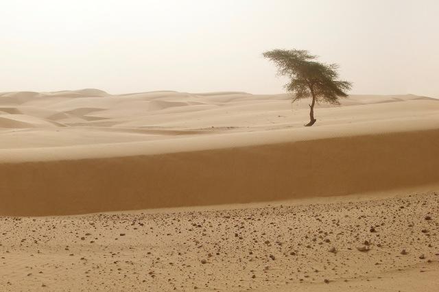 première dune0000